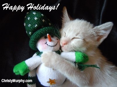 Holiday kitte cuddling with snowman toy